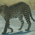 -نمر-2019-معلومات-النمور-كاملة-صور-ميكس-41-150x150 صور نمر 2019 معلومات النمور كاملة