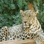 -نمر-2019-معلومات-النمور-كاملة-صور-ميكس-44-150x150 صور نمر 2019 معلومات النمور كاملة