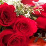 -ورد-أحمر-وفوائد-الورد-الأحمر-صور-ميكس-12-150x150 صور ورد أحمر وفوائد الورد الأحمر
