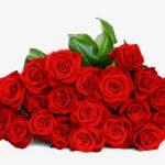 -ورد-أحمر-وفوائد-الورد-الأحمر-صور-ميكس-17-150x150 صور ورد أحمر وفوائد الورد الأحمر