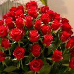 -ورد-أحمر-وفوائد-الورد-الأحمر-صور-ميكس-18-150x150 صور ورد أحمر وفوائد الورد الأحمر
