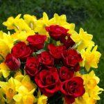 -ورد-أحمر-وفوائد-الورد-الأحمر-صور-ميكس-25-150x150 صور ورد أحمر وفوائد الورد الأحمر