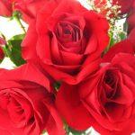 -ورد-أحمر-وفوائد-الورد-الأحمر-صور-ميكس-3-150x150 صور ورد أحمر وفوائد الورد الأحمر