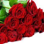 -ورد-أحمر-وفوائد-الورد-الأحمر-صور-ميكس-47-150x150 صور ورد أحمر وفوائد الورد الأحمر