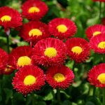 -ورد-أحمر-وفوائد-الورد-الأحمر-صور-ميكس-48-150x150 صور ورد أحمر وفوائد الورد الأحمر