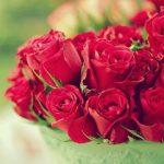 -ورد-أحمر-وفوائد-الورد-الأحمر-صور-ميكس-6-150x150 صور ورد أحمر وفوائد الورد الأحمر