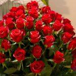 -ورد-أحمر-وفوائد-الورد-الأحمر-صور-ميكس-8-150x150 صور ورد أحمر وفوائد الورد الأحمر