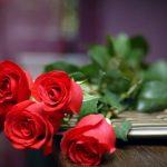 -ورد-أحمر-وفوائد-الورد-الأحمر-صور-ميكس-9-150x150 صور ورد أحمر وفوائد الورد الأحمر