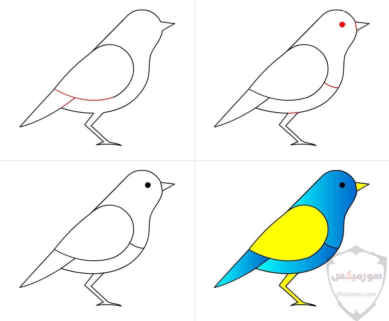عصافير جميلةاجمل عصافير الحبأجمل طيور العالم بالصوراجمل الصور عصافير كناري 1