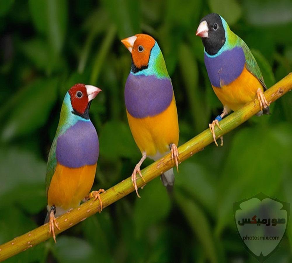 عصافير جميلةاجمل عصافير الحبأجمل طيور العالم بالصوراجمل الصور عصافير كناري 2