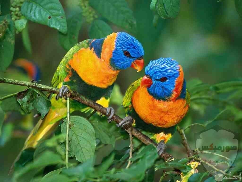 عصافير جميلةاجمل عصافير الحبأجمل طيور العالم بالصوراجمل الصور عصافير كناري 3
