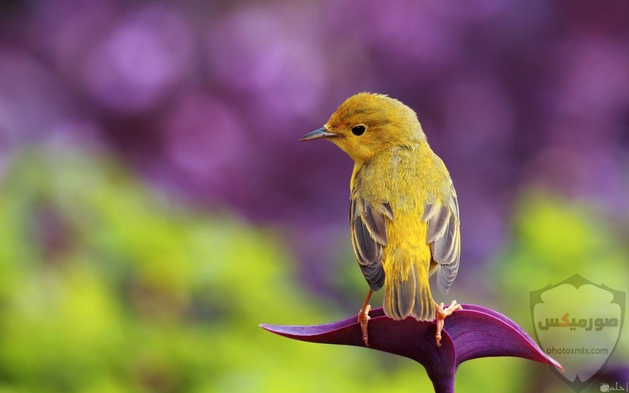 عصافير جميلةاجمل عصافير الحبأجمل طيور العالم بالصوراجمل الصور عصافير كناري 6
