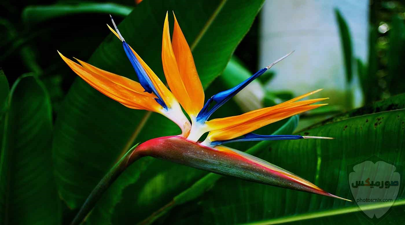 عصافير جميلةاجمل عصافير الحبأجمل طيور العالم بالصوراجمل الصور عصافير كناري 8
