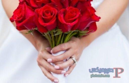 صور ورد رومانسى جميل Hd صور ومناظر ورود رومانسية صورميكس