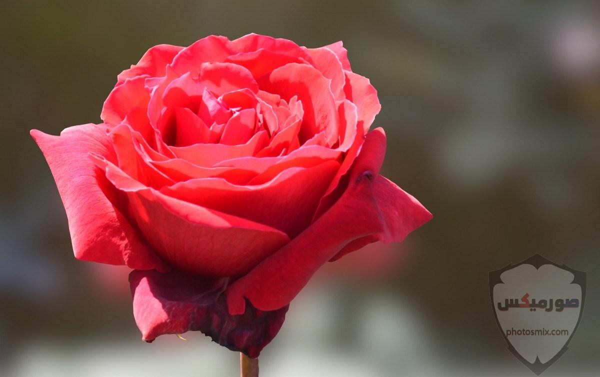 تنزيل صور جميلة تحميل اجمل الصور 3