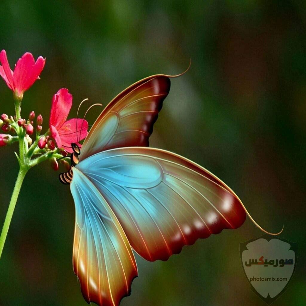 تنزيل صور جميلة تحميل اجمل الصور 6