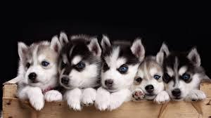 معلومات عن الكلاب 1