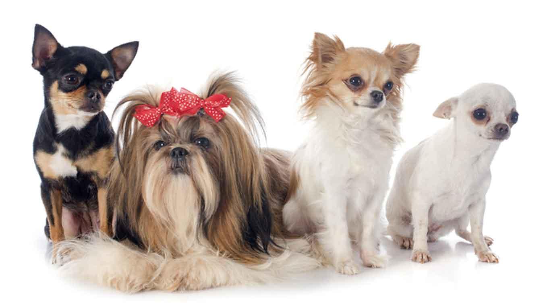 معلومات عن الكلاب 2