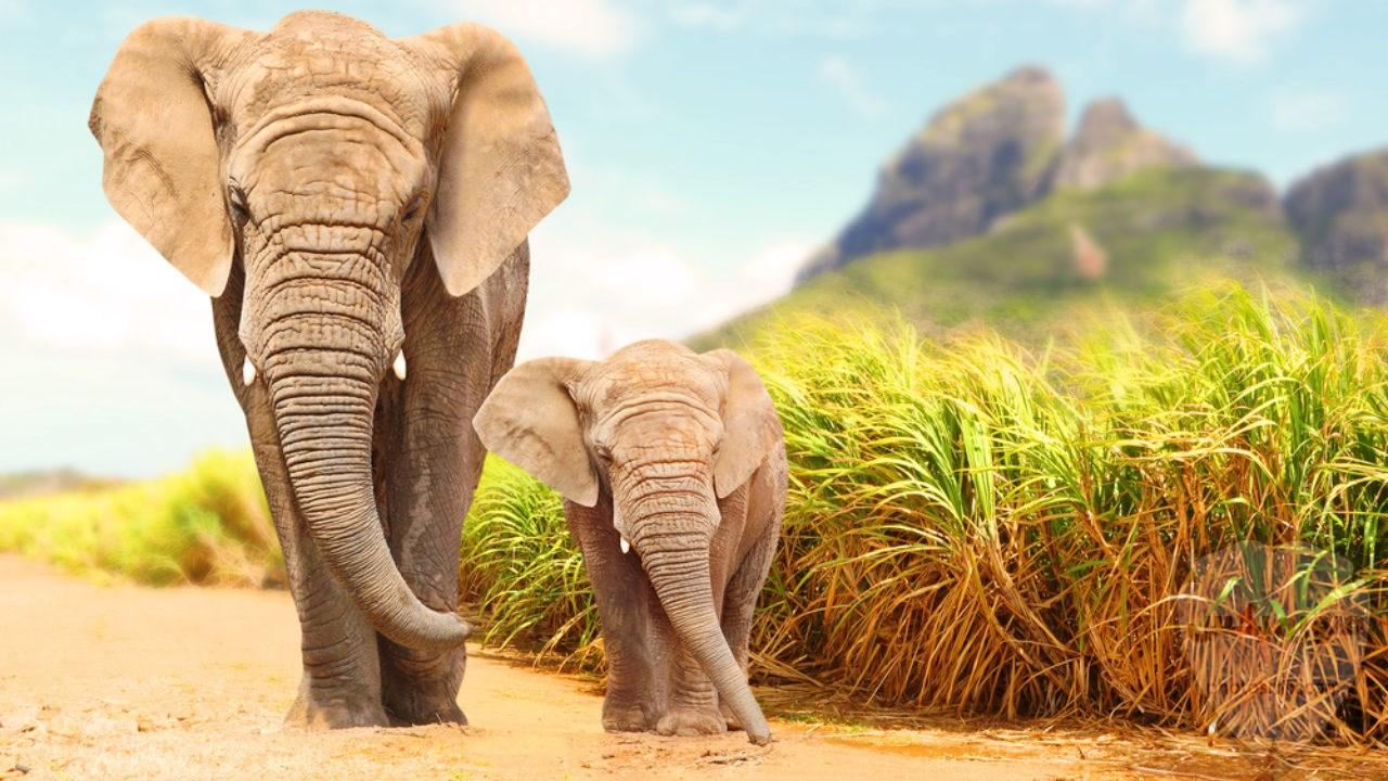 صور افيال أجمل صور فيل 2020 1