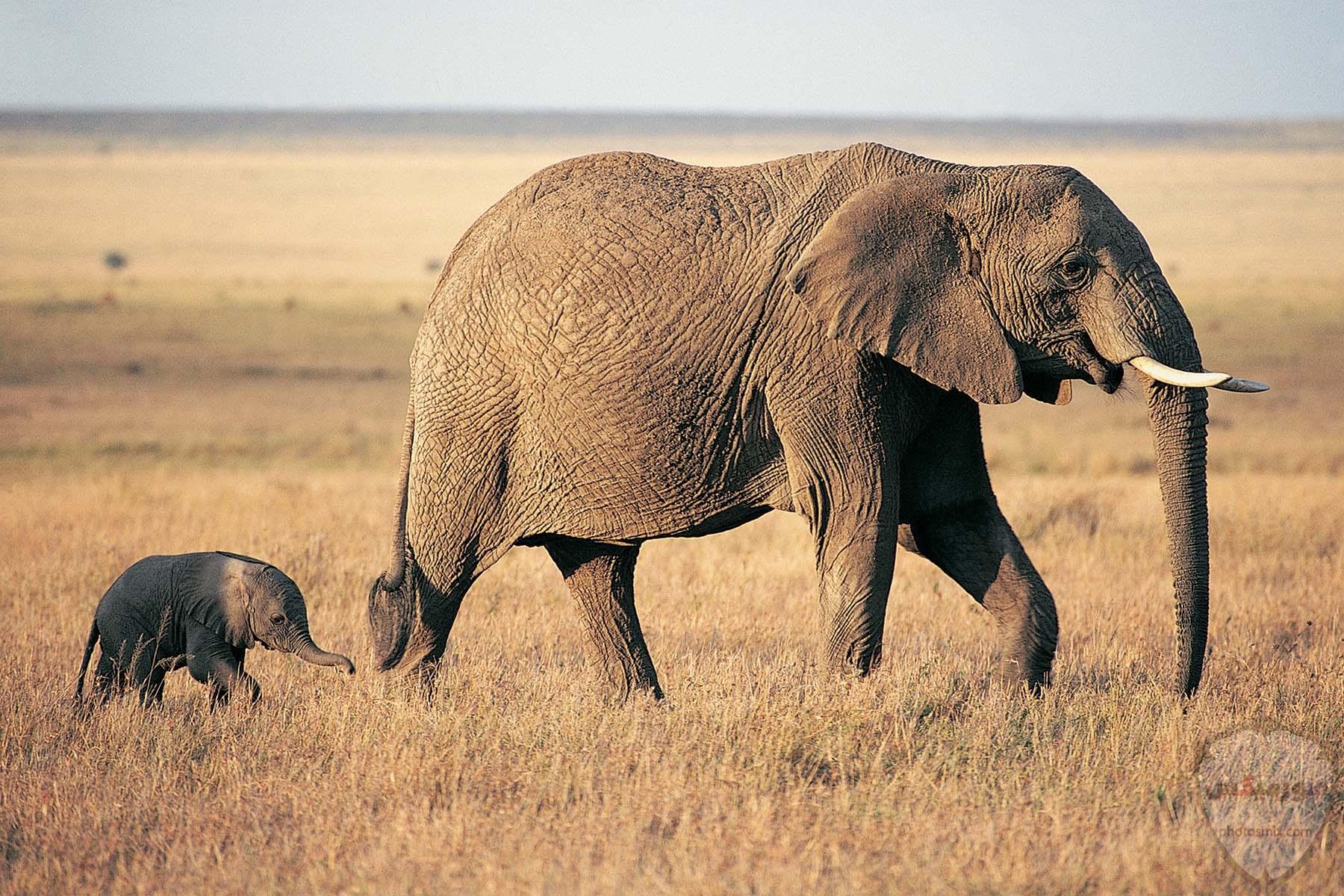 صور افيال أجمل صور فيل 2020 2