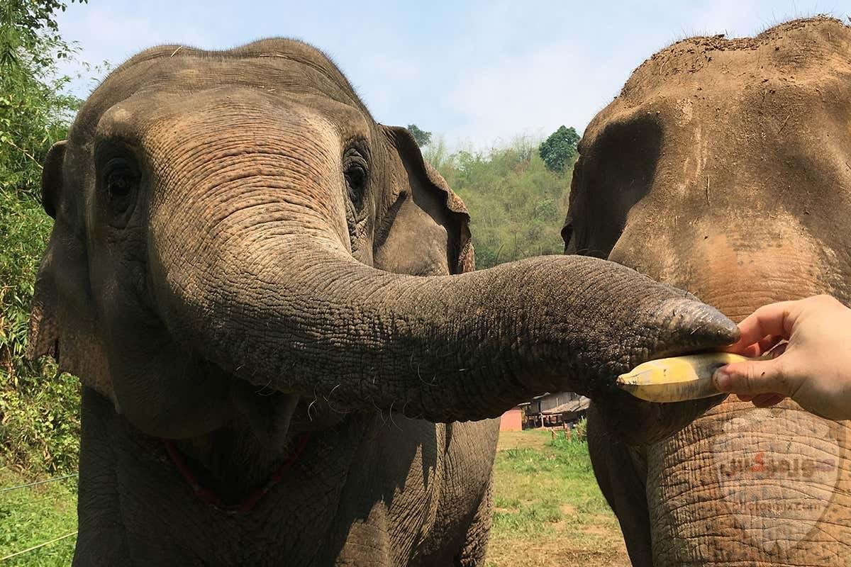 صور افيال أجمل صور فيل 2020 7