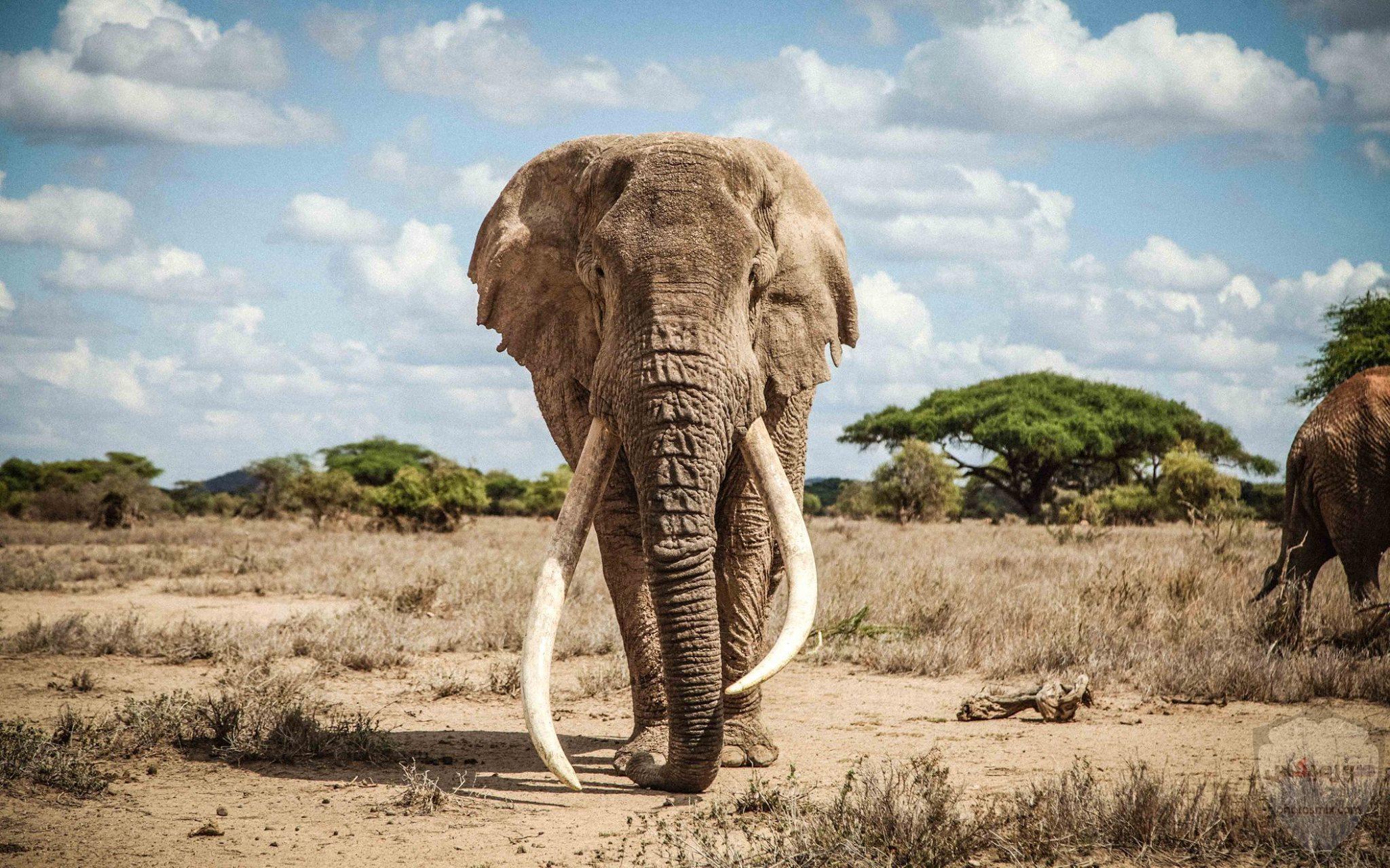 صور افيال أجمل صور فيل 2020 8