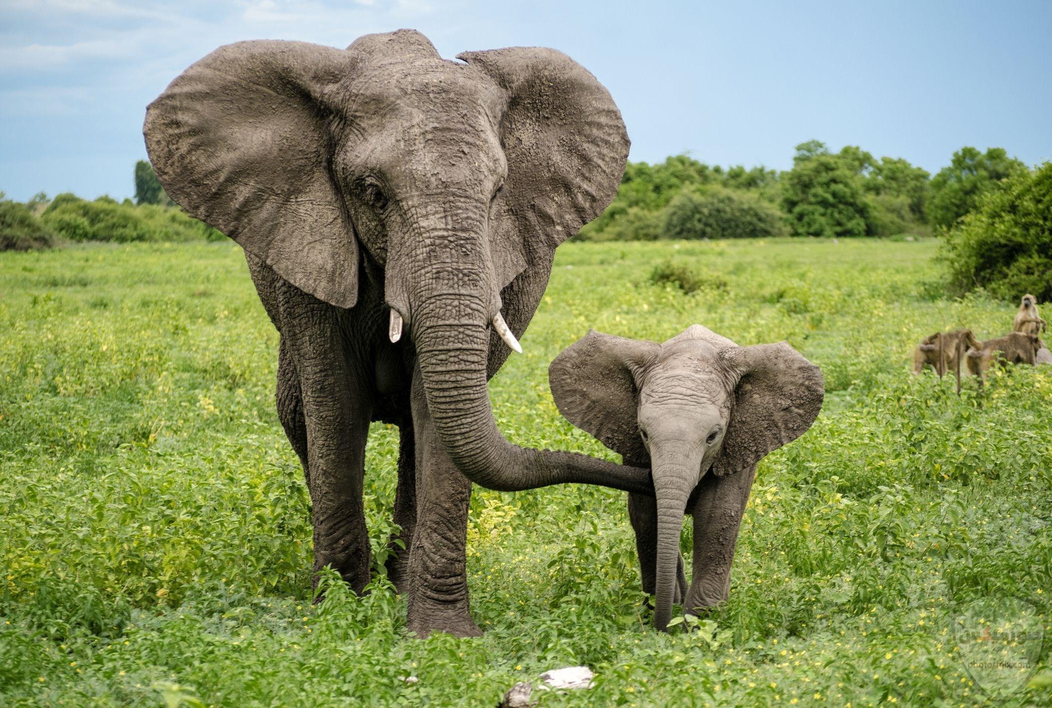 صور افيال أجمل صور فيل 2020 9