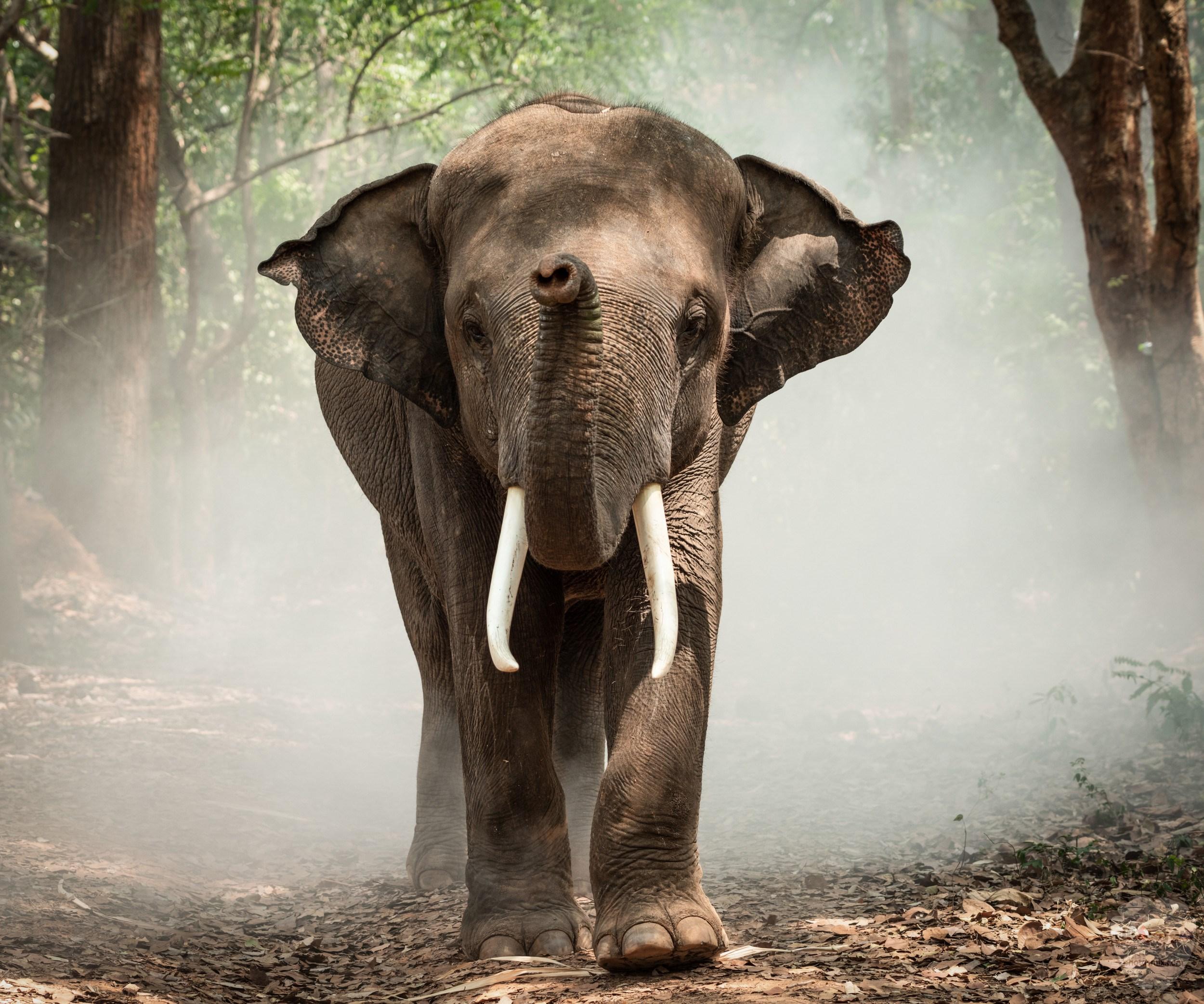 صور الفيل لمحبي الحيوانات وخصوصا الفيل سنقدم لكم مجموعة صور رائعة وجميلة جدا عن حيوان الفيل 2