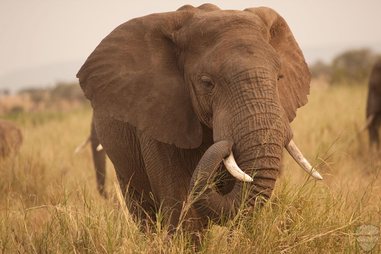 صور الفيل لمحبي الحيوانات وخصوصا الفيل سنقدم لكم مجموعة صور رائعة وجميلة جدا عن حيوان الفيل 4