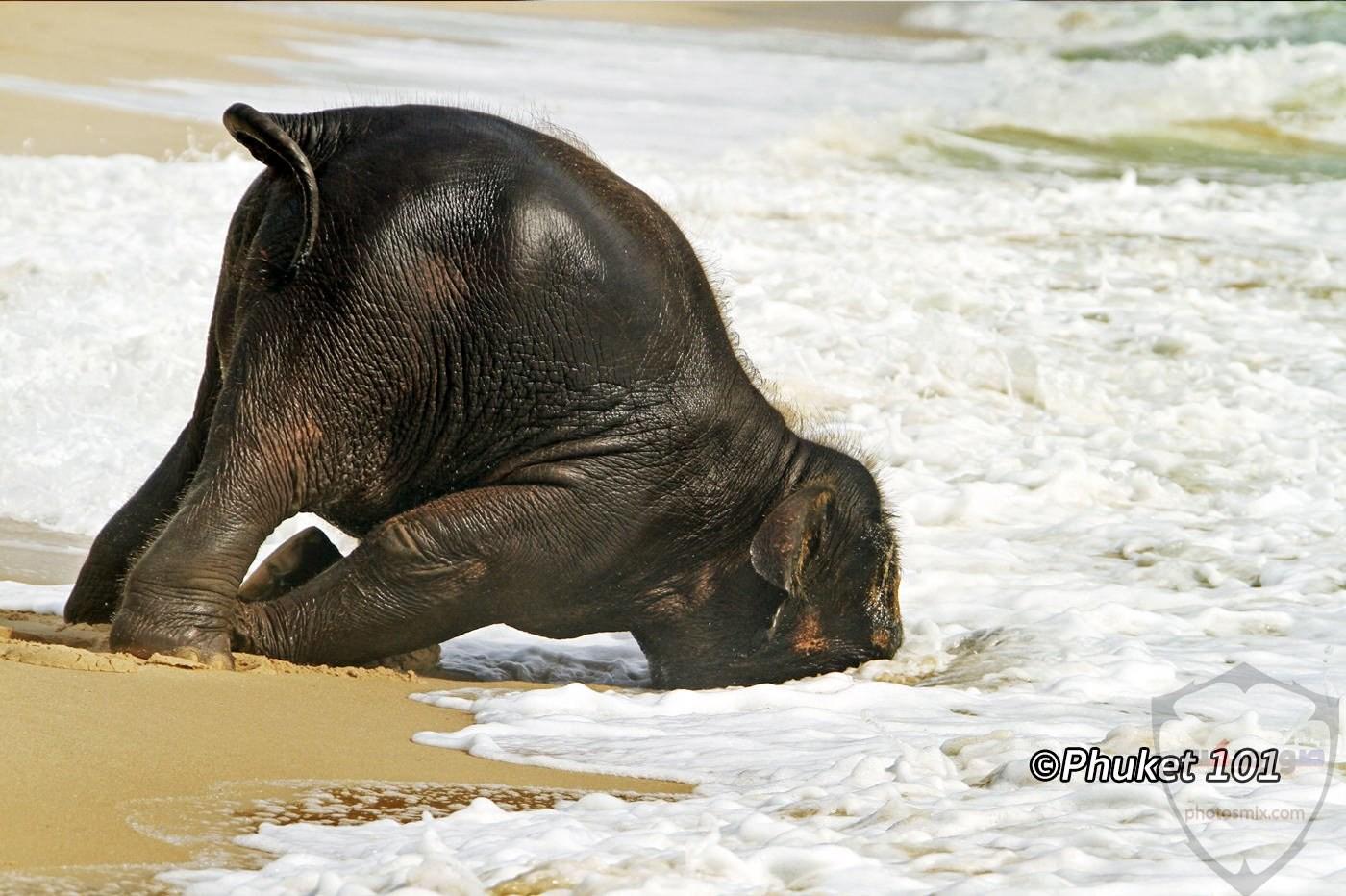 صور الفيل لمحبي الحيوانات وخصوصا الفيل سنقدم لكم مجموعة صور رائعة وجميلة جدا عن حيوان الفيل 7