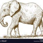 صور وخلفيات الفيل ومعلومات كاملة عن الفيل 25