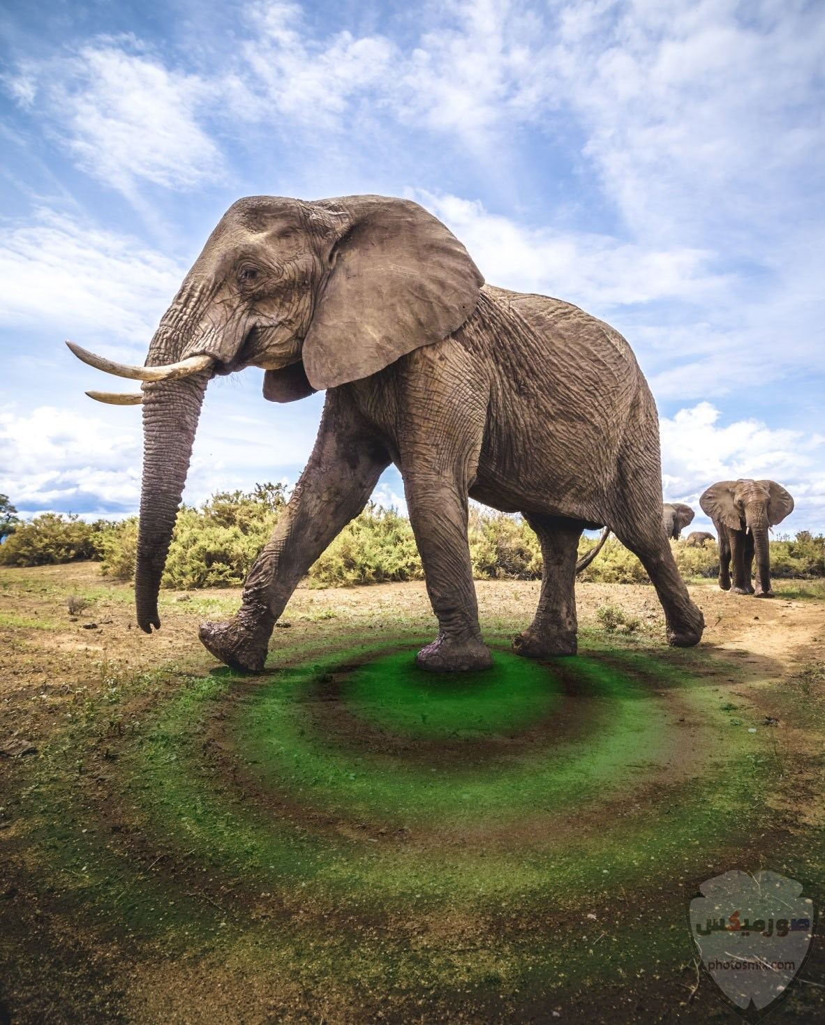 صور وخلفيات الفيل ومعلومات كاملة عن الفيل 26 1