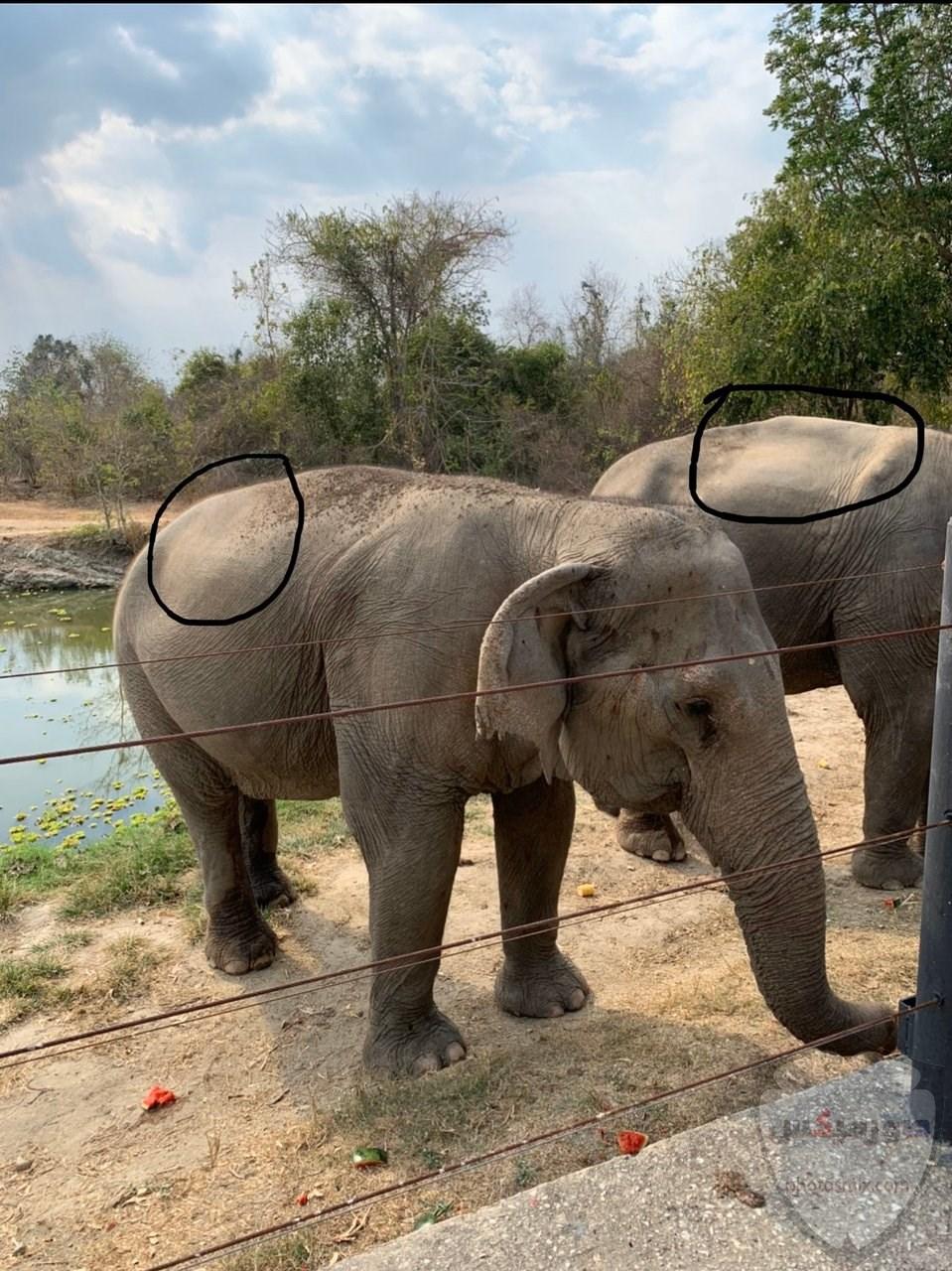 صور وخلفيات الفيل ومعلومات كاملة عن الفيل 27 1