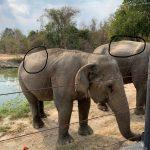 صور وخلفيات الفيل ومعلومات كاملة عن الفيل 27