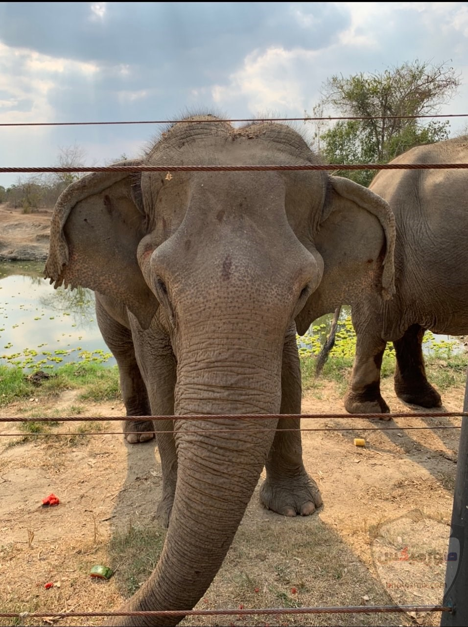 صور وخلفيات الفيل ومعلومات كاملة عن الفيل 28 1