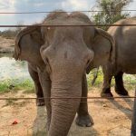 صور وخلفيات الفيل ومعلومات كاملة عن الفيل 28