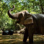 صور وخلفيات الفيل ومعلومات كاملة عن الفيل 29