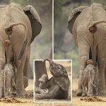 صور وخلفيات الفيل ومعلومات كاملة عن الفيل 3