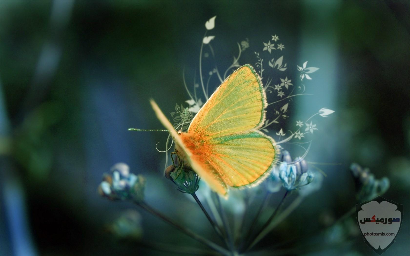 اجمل صور صور جميلة صور جميلة مكتوب عليها اجمل صور خلفيات 18