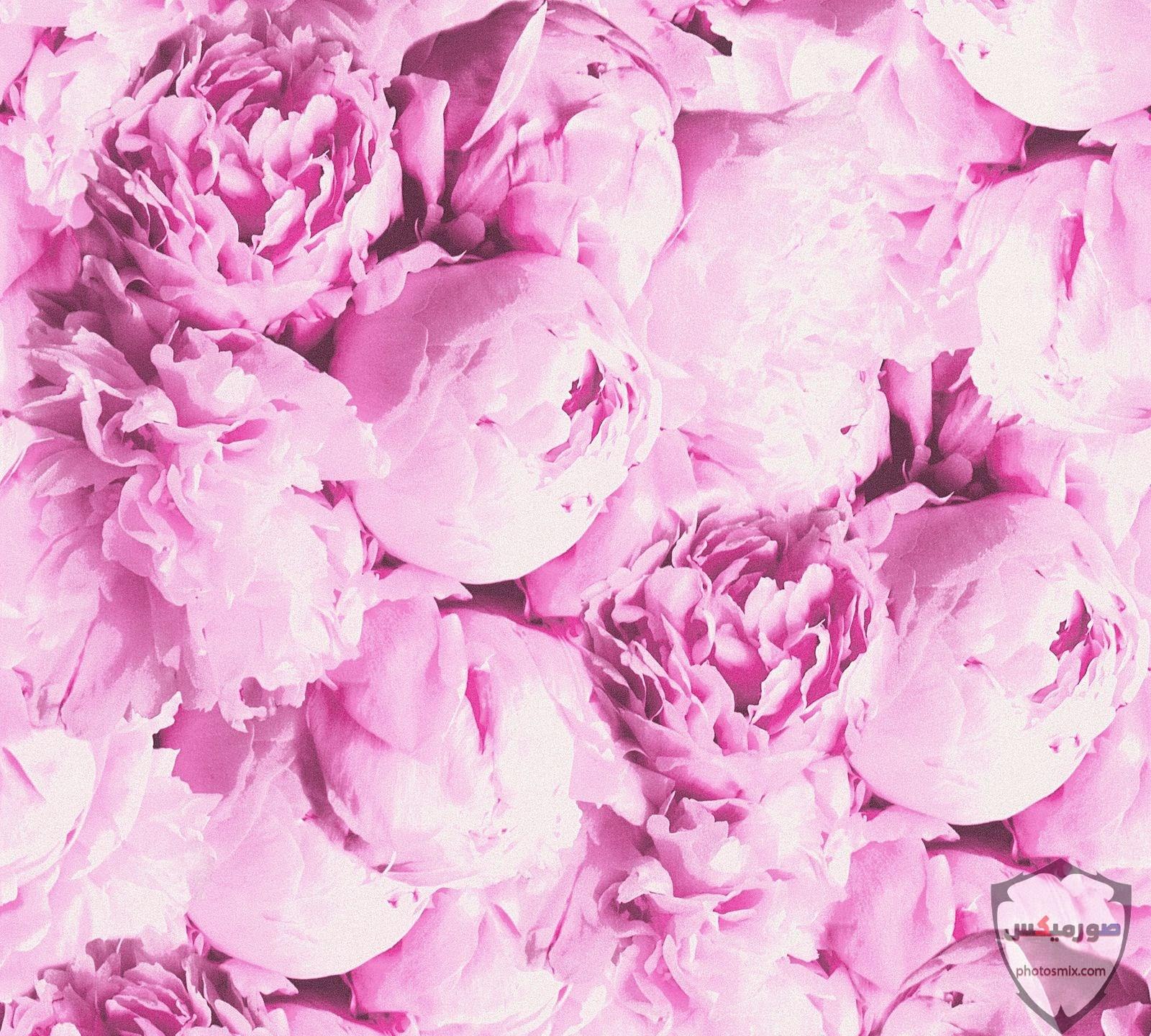 خواطر رائعة عن الورود 12