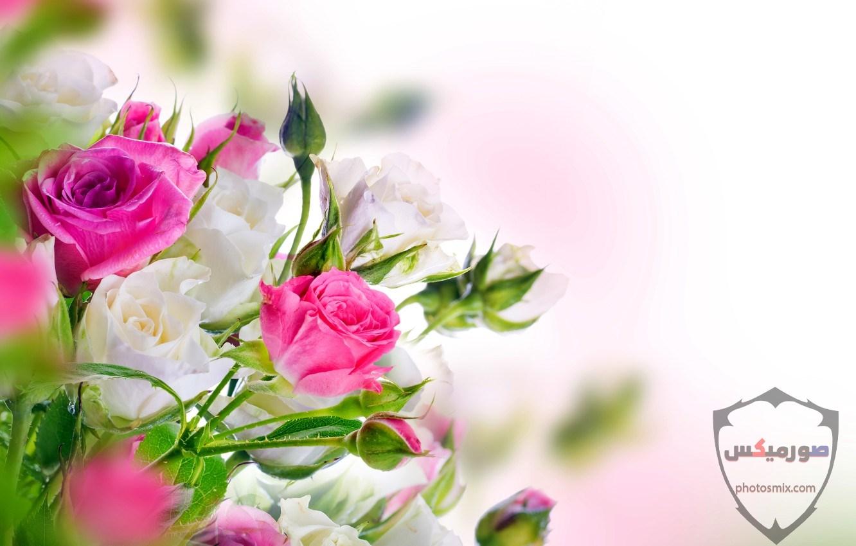 خواطر رائعة عن الورود 14