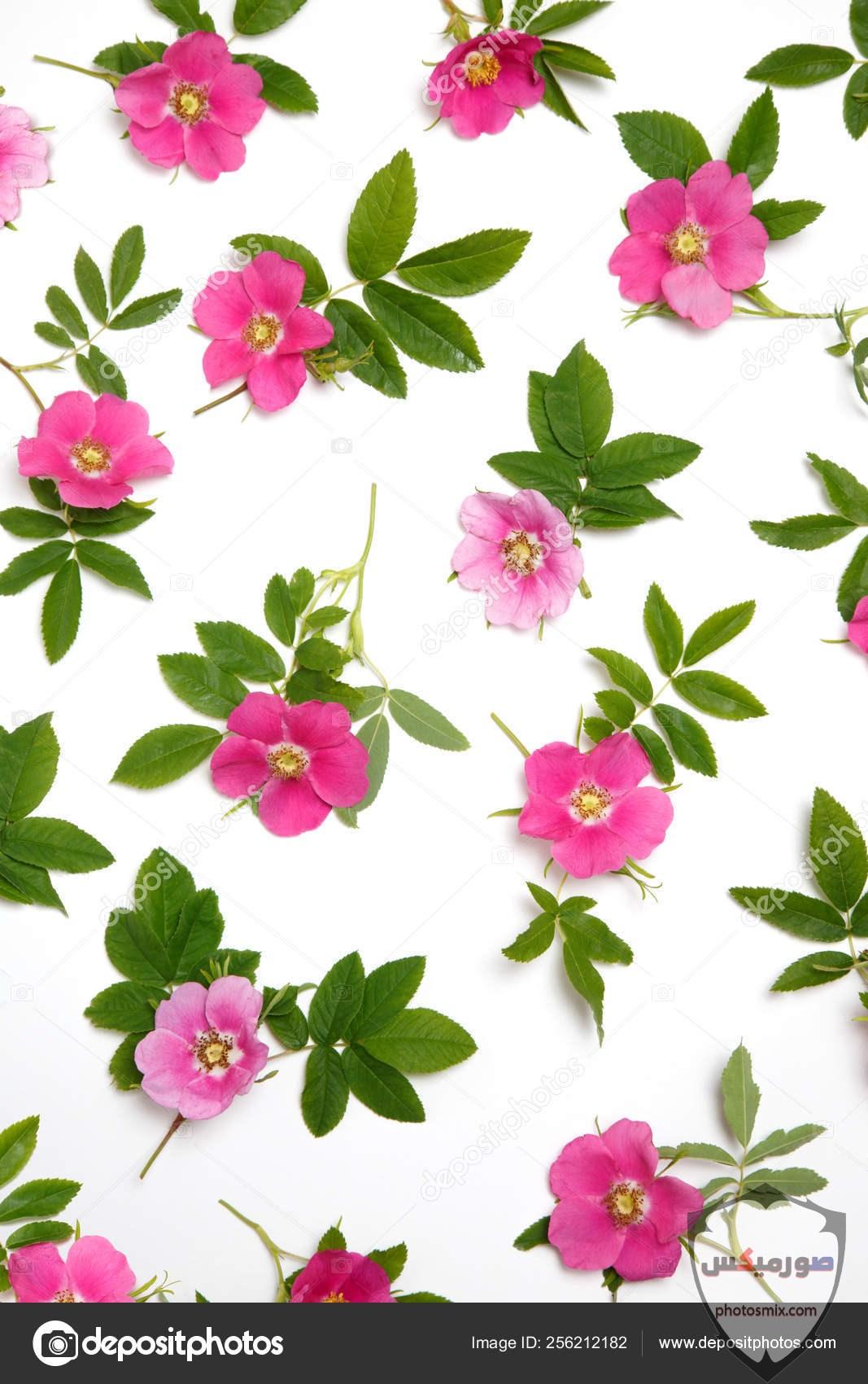 خواطر رائعة عن الورود 4 1