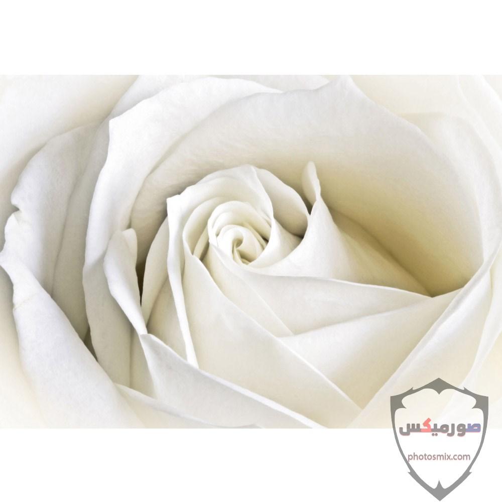 خواطر رائعة عن الورود 6
