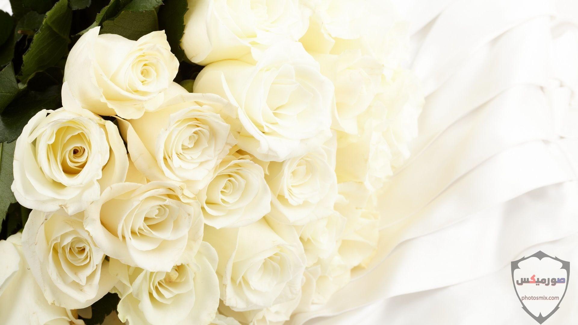 خواطر رائعة عن الورود 7