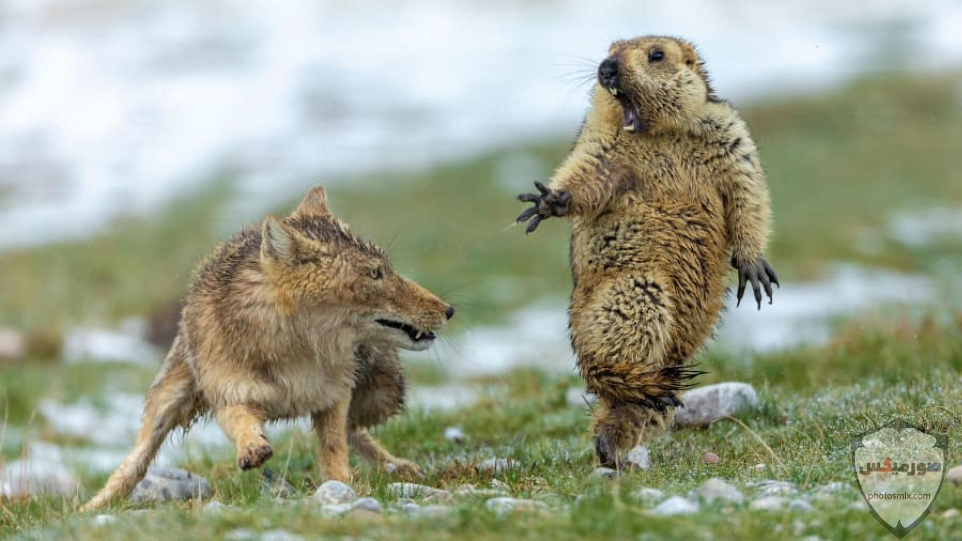 صور حيوانات مضحكة فيديوهات حيوانات مضحكة جدا 2020 1