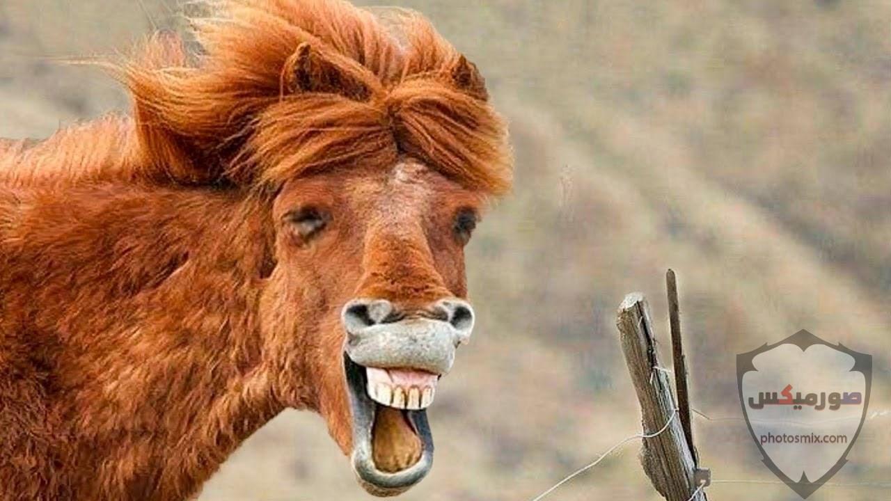 صور حيوانات مضحكة فيديوهات حيوانات مضحكة جدا 2020 12