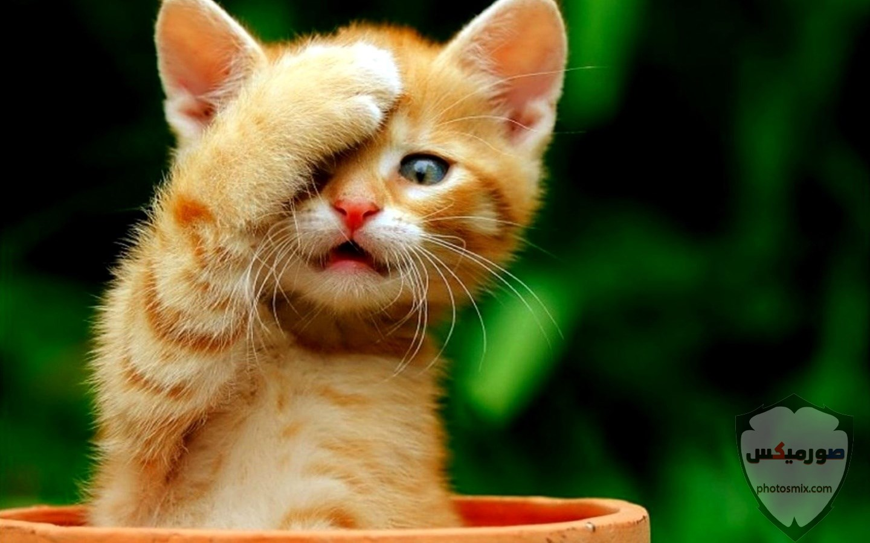 صور حيوانات مضحكة فيديوهات حيوانات مضحكة جدا 2020 13