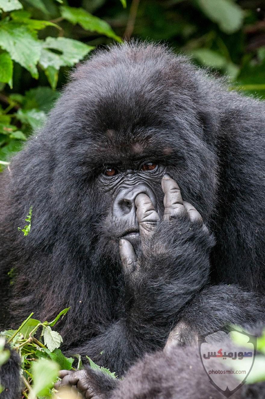 صور حيوانات مضحكة فيديوهات حيوانات مضحكة جدا 2020 18