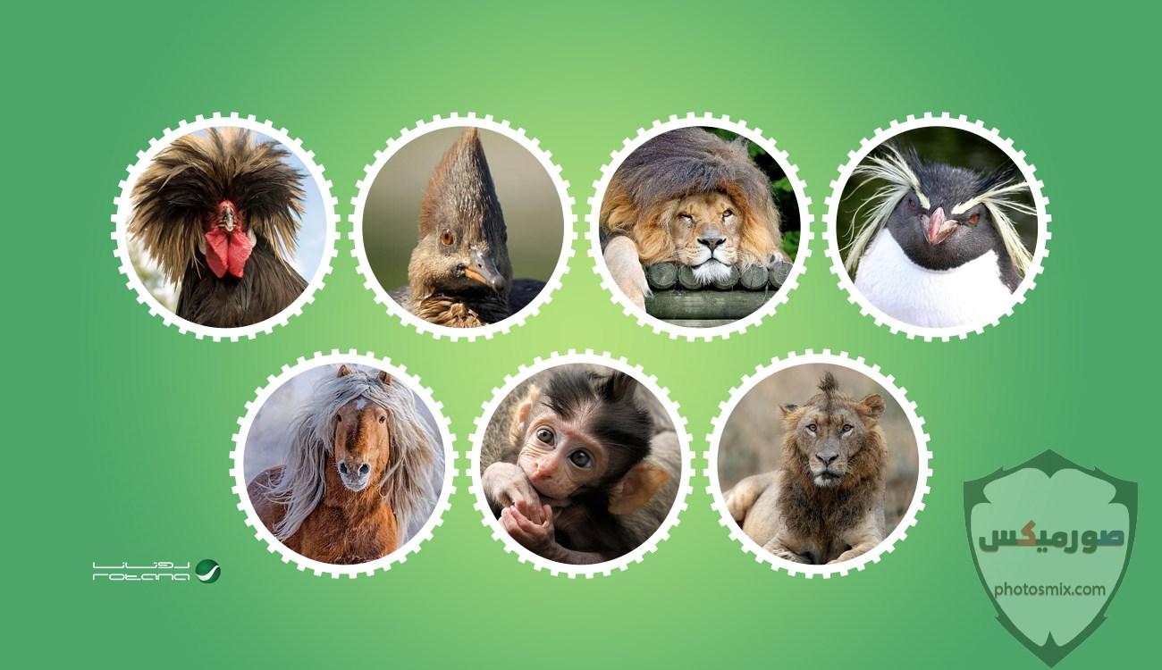 صور حيوانات مضحكة فيديوهات حيوانات مضحكة جدا 2020 20