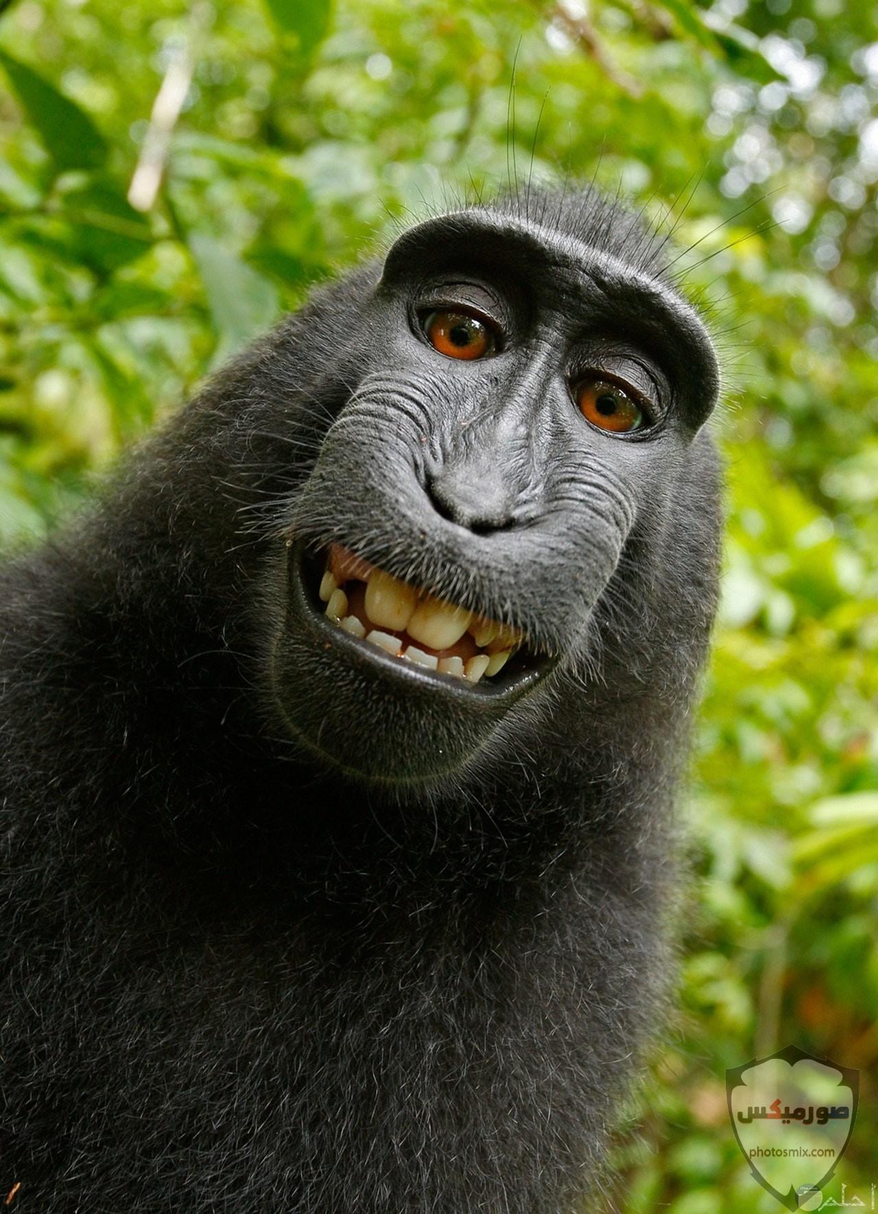 صور حيوانات مضحكة فيديوهات حيوانات مضحكة جدا 2020 26